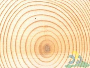 wood-02