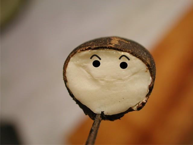 103微笑 痲瘋樹種子