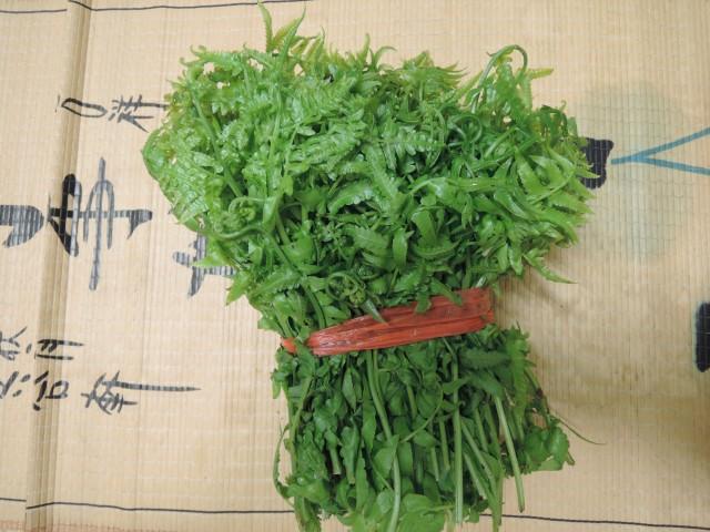 10菜市場植物學-蕨A1