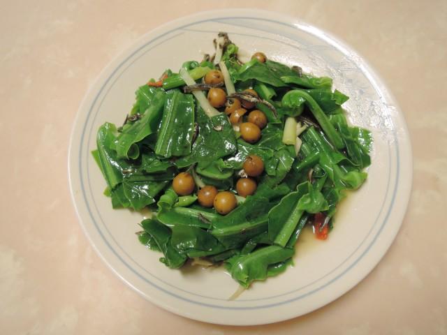 10菜市場植物學-蕨I