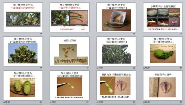 103裸子植物B12