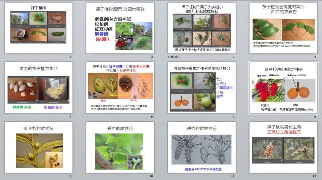 103裸子植物B12a