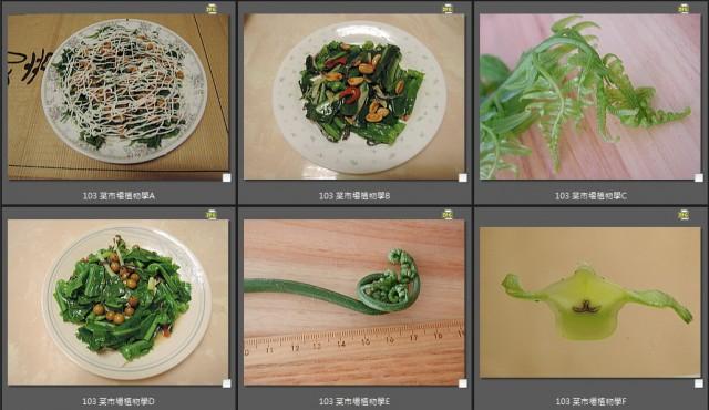 103 菜市場植物學-蕨59