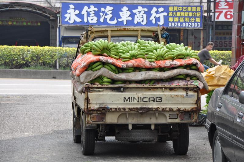 香蕉採收R