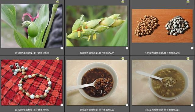 103菜市場植物學-單子葉植物A00