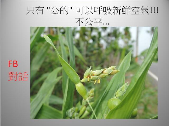 103菜市場植物學-單子葉植物A04a