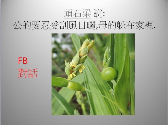 103菜市場植物學-單子葉植物A04b