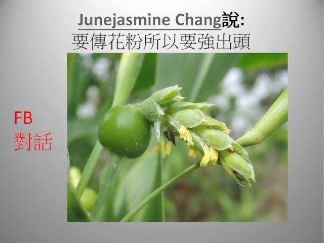 103菜市場植物學-單子葉植物A04c