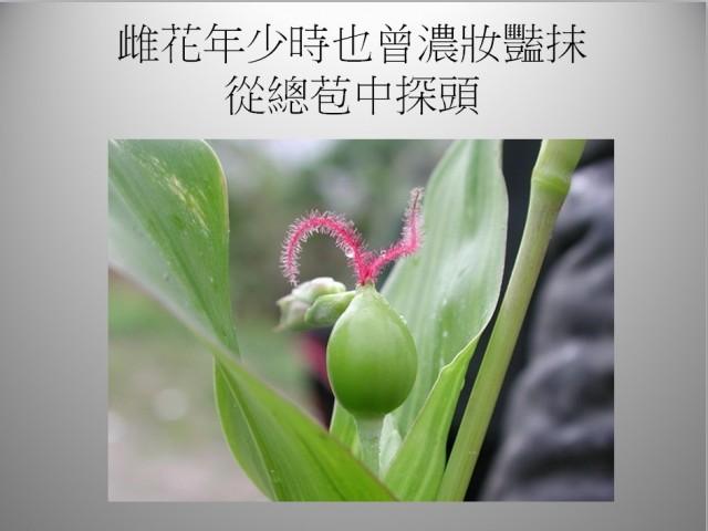 103菜市場植物學-單子葉植物A04d