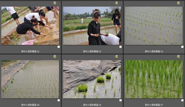103菜市場植物學-單子葉植物B13