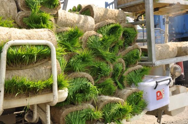 103菜市場植物學-單子葉植物B14