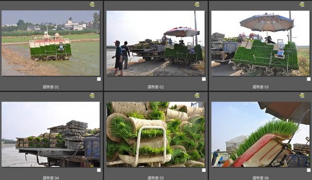 103菜市場植物學-單子葉植物B15