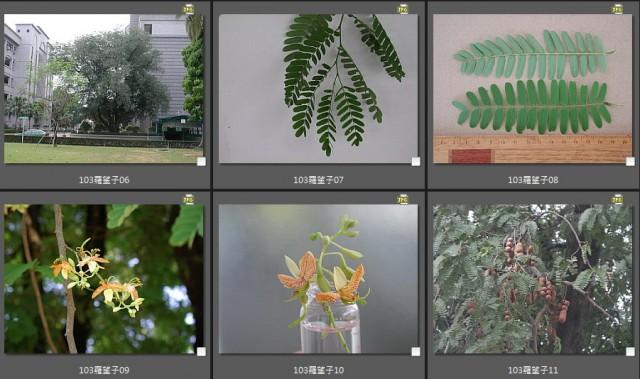 103菜市場植物學-種子植物B