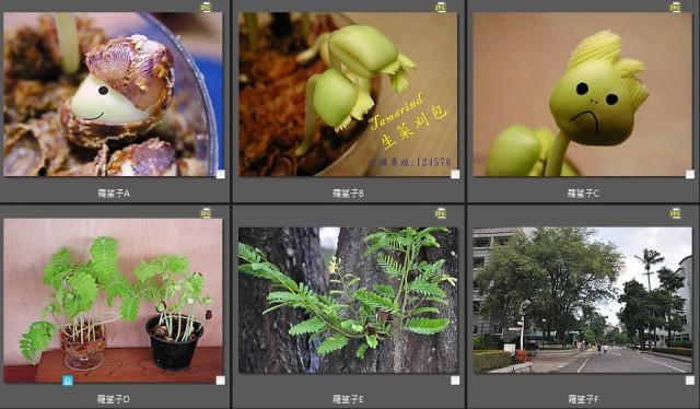 103菜市場植物學-種子植物B1