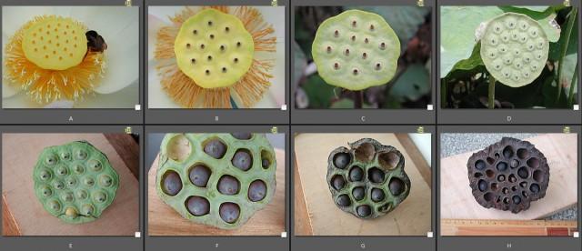 103菜市場植物學-種子植物M