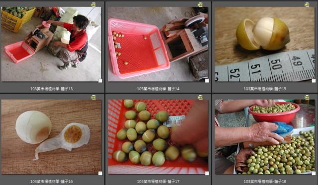 103菜市場植物學-種子植物O