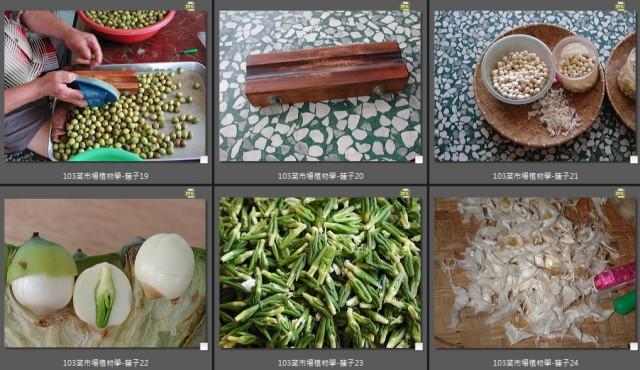 103菜市場植物學-種子植物P