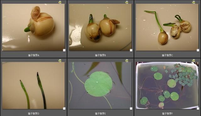103菜市場植物學-種子植物Q