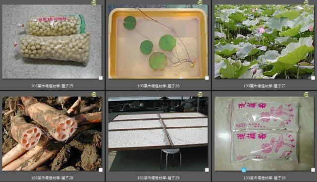 103菜市場植物學-種子植物R