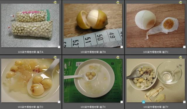 103菜市場植物學-種子植物U