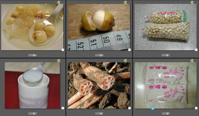 103菜市場植物學-種子植物V