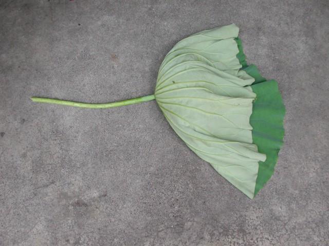 103菜市場植物學-種子植物X