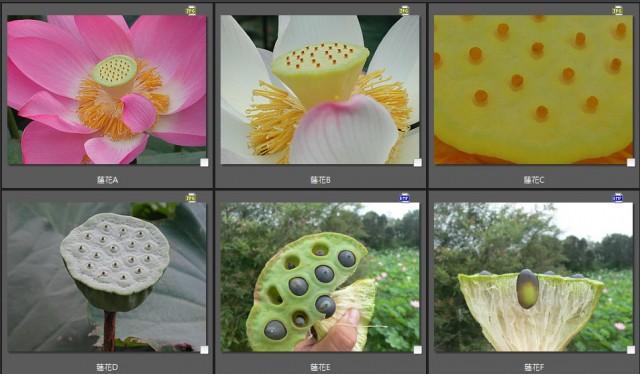 103菜市場植物學-種子植物Y
