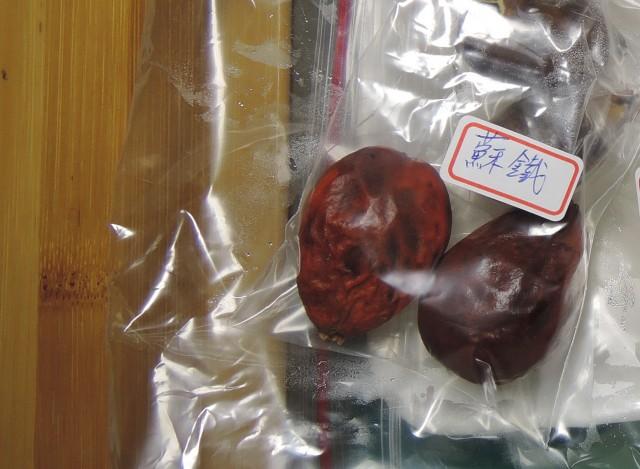 103蘇鐵種子09