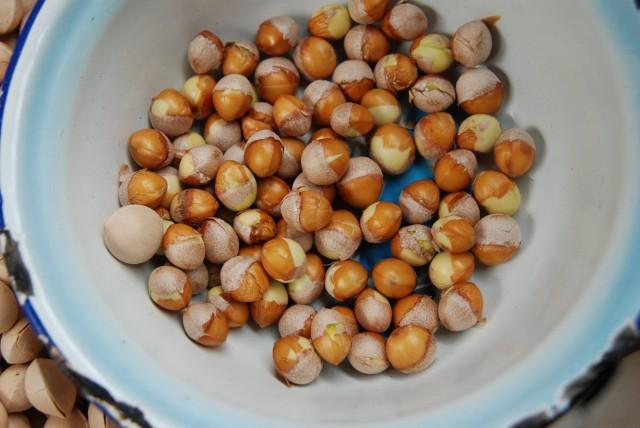 103銀杏種子24