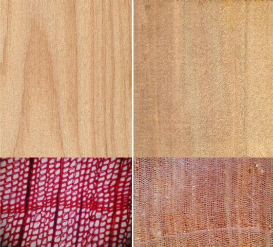 103貝殼杉W01