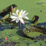104新年數鳥於屏東農科