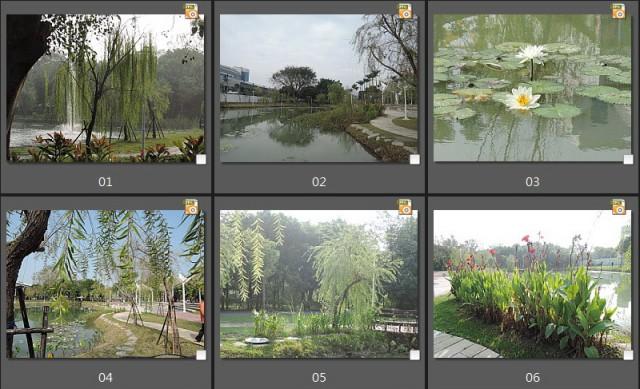 千禧公園水生植物E