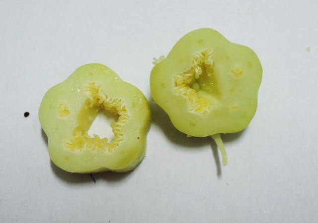 雌化雄蕊兩性花D-07