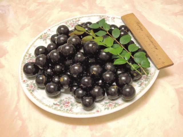 104樹葡萄-果實09
