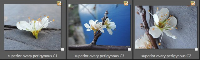 superior ovary perigynous