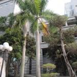 104-03屏東大學植物之旅