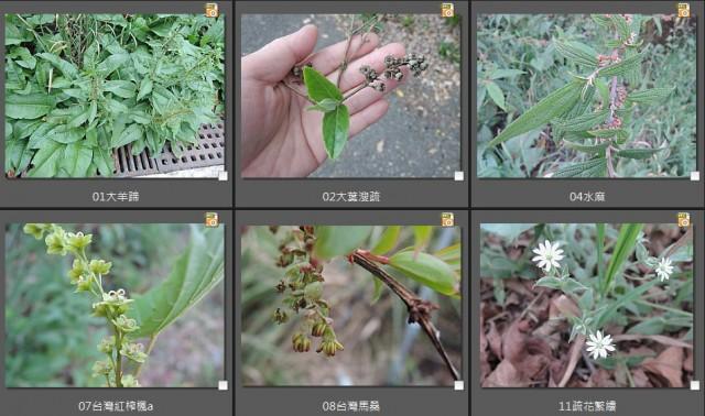 新認識植物01