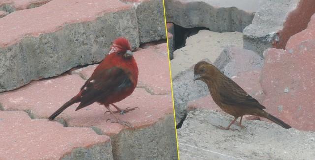 104合歡山-蓮華池bird06-A