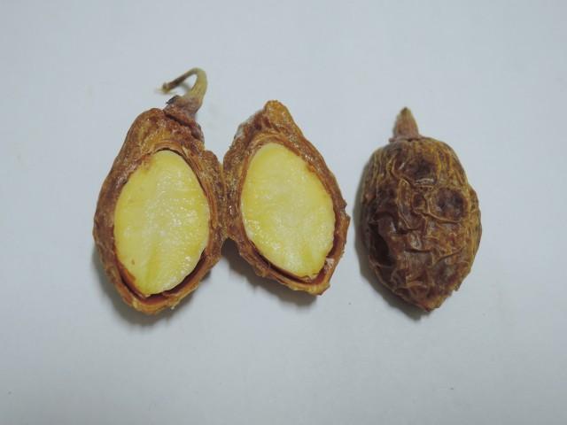 104銀杏種子B12