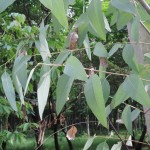 104-06屏東大學植物之旅-植物篇