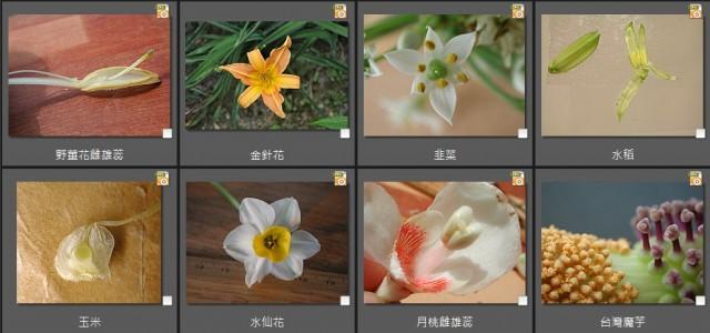 單子葉植物之花