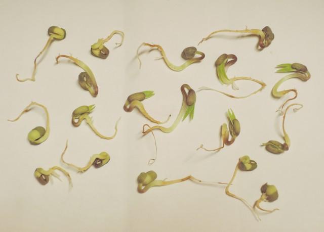 紅豆與綠豆A01a