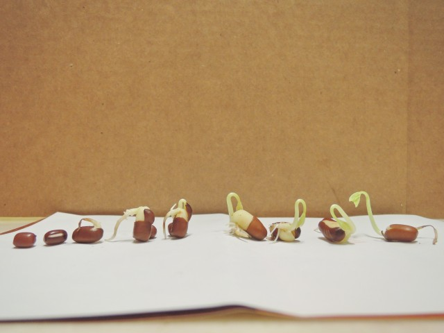 紅豆與綠豆A01b