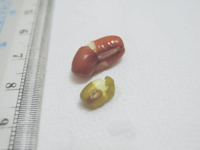 紅豆與綠豆A11