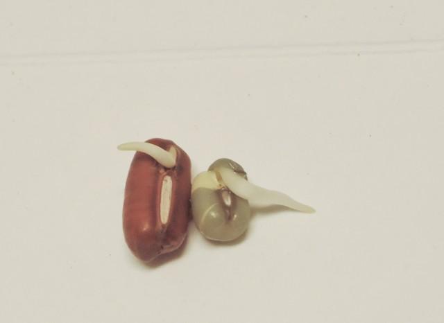紅豆與綠豆A12