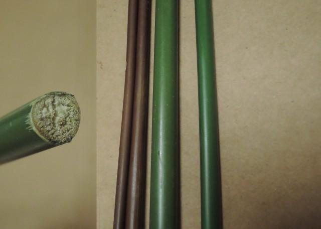 蘭嶼竹芋C17