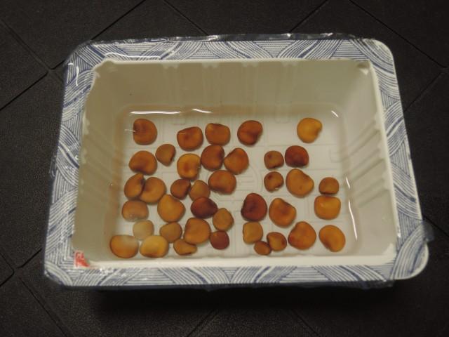 105豆薯B31