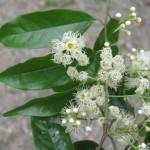 105-04 二集團植物