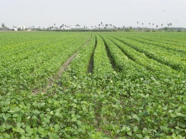 105紅豆生命週期25