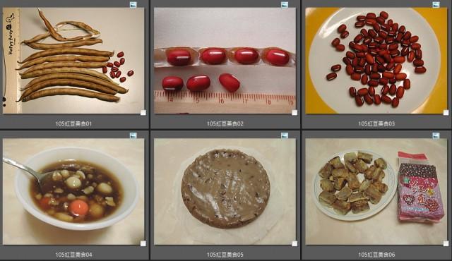 105紅豆生命週期30